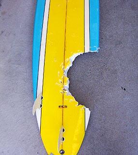 Prancha do surfista Jonathon Beard ficou marcada pela mordida do tubarão